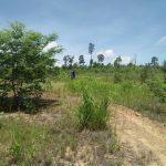 เทศบาลตำบลบ้านเขว้า ลงพื้นที่ป่าโล่ใหญ่ดำเนินการบำรุงรักาษาต้นไม้ ตามโครงการ โครงการ 1 จังหวัด 1 สวนสาธารณะเฉลิมพระเกียรติ จังหวัดชัยภูมิ ตัดวัชพืช พรวนดิน และทำแนวกันไฟ